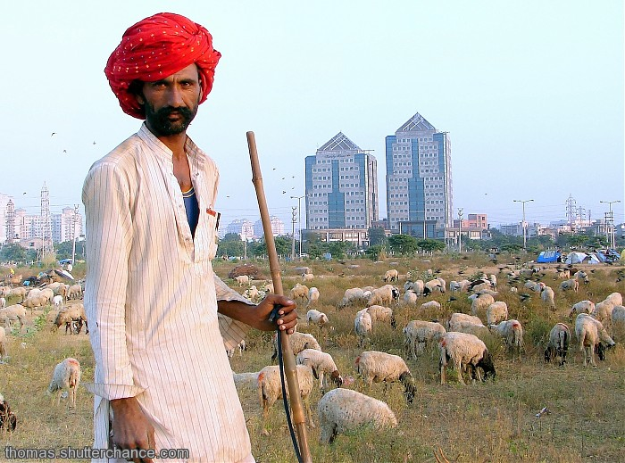 photoblog image The Shepherd n his sheep in the big, bad city